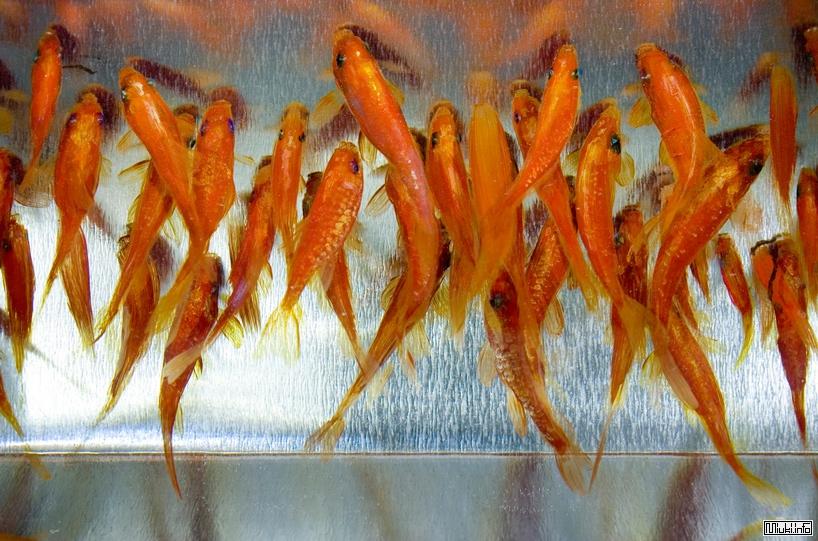Riusuke Fukahori - Спасение золотой рыбки - 3D/ART