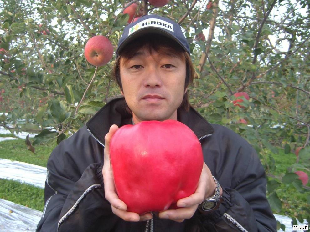Самое тяжелое японское яблоко из книги Гиннеса