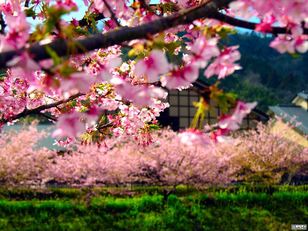 Комацу Сакё. Праздник цветов