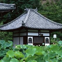 Japan 2 (архив)