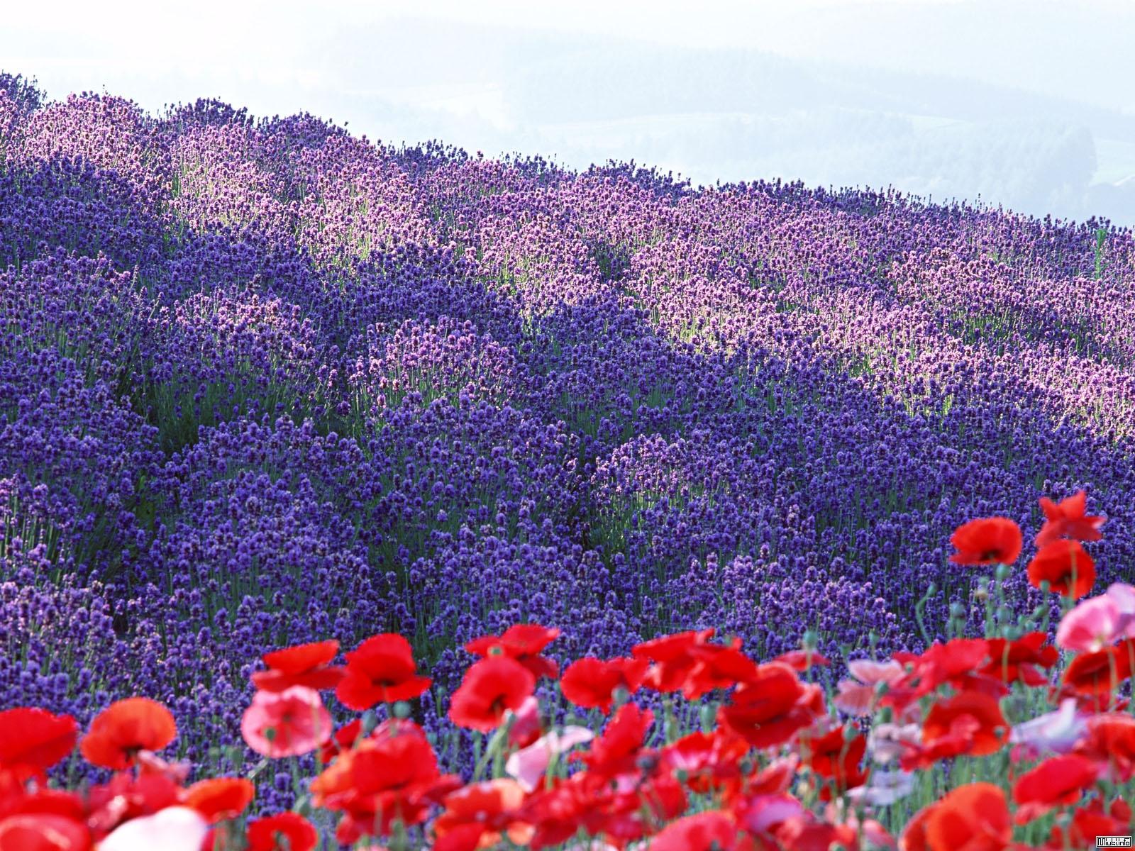 Кисэцукан. Японское чувство сезонности. Времена года