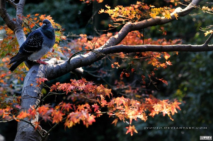 География и природа Японии