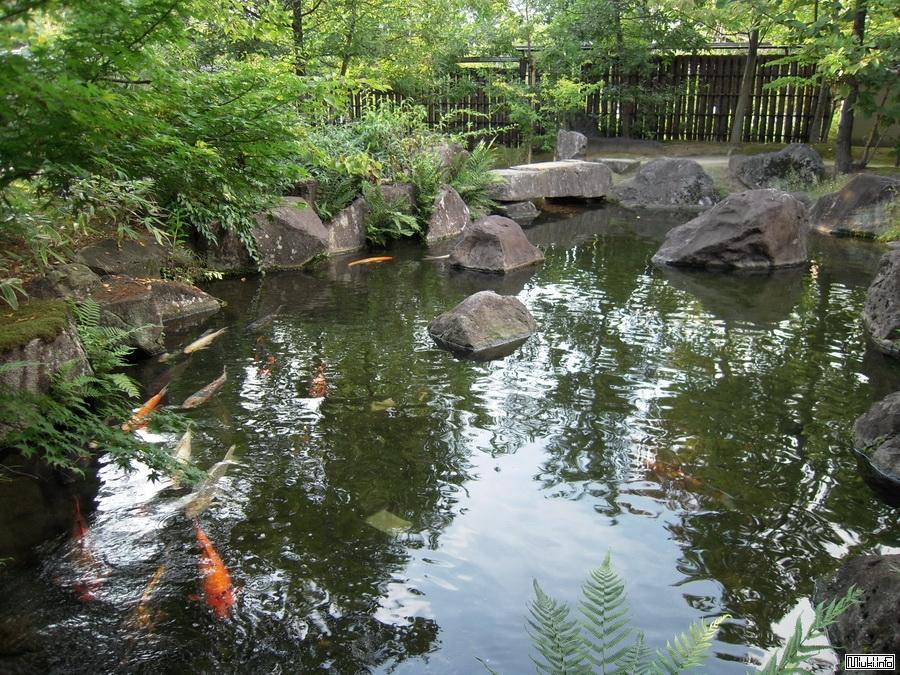 Виды японских садов