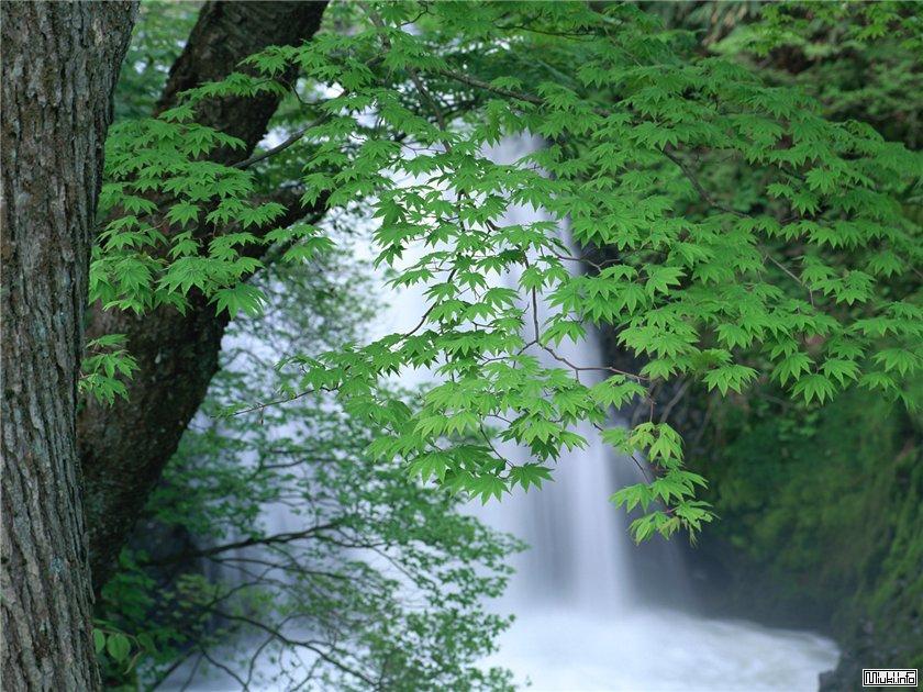 Водяные драконы. Водопады в Японии