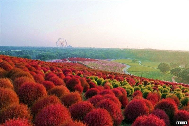 Курорты и пляжный отдых в Японии