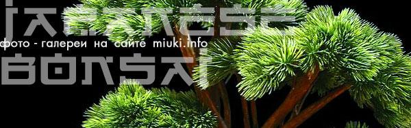 Галерея БОНСАЙ на сайте miuki.info
